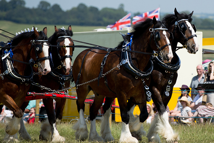 James Sharp sponsors The Shire Horse Society National Show 2015